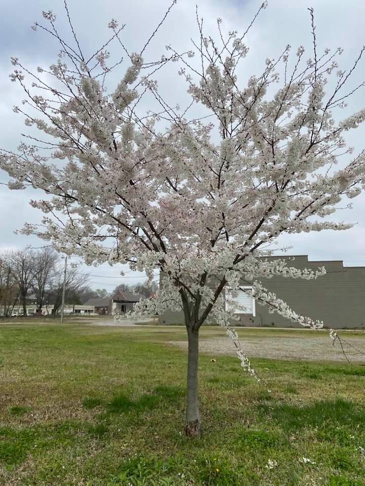 Tree in Unity Park (1)